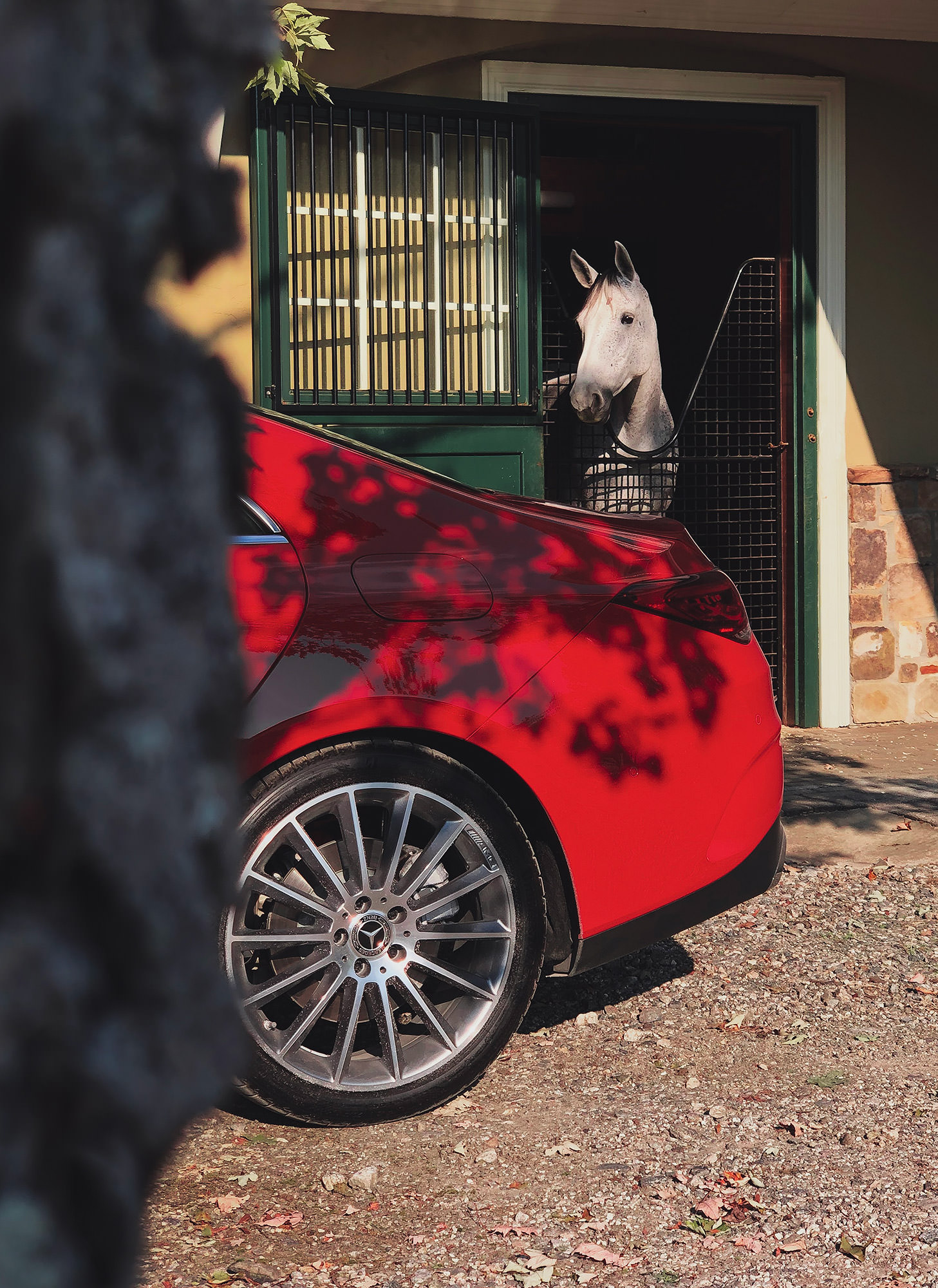 Horse in stable looking at red Mercedes-Benz CLA